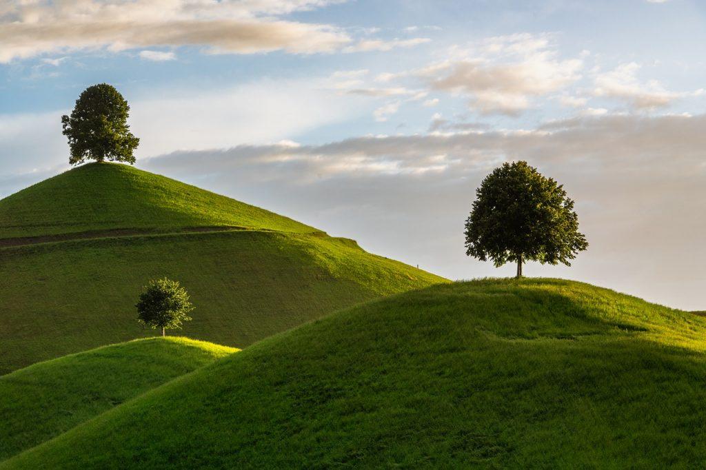 hill, tree, drumlin